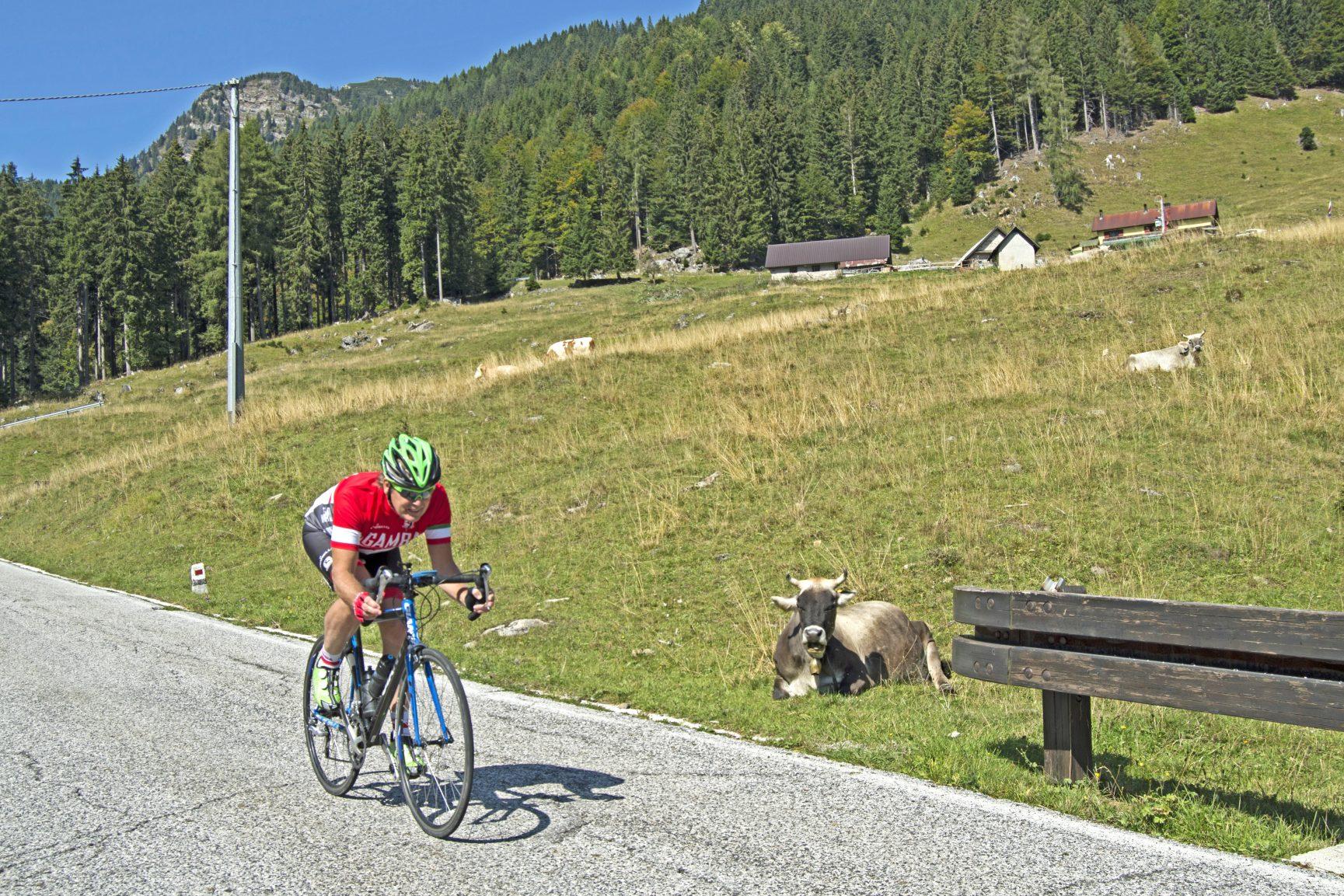 Weissensee Afdaling Passo Pramollo langs koeien Foto Margo Kool